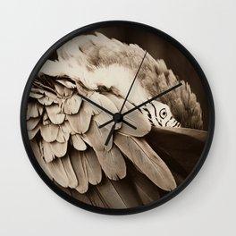Macaw in Santa Barbara, California Wall Clock