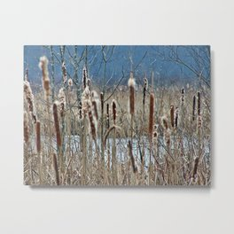 Cattail, Bulrush and Wetlands Metal Print