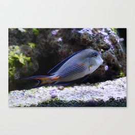 Sea World Colorful Fish Canvas Print