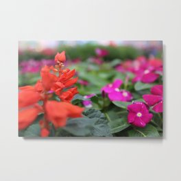 Red and Pink Metal Print