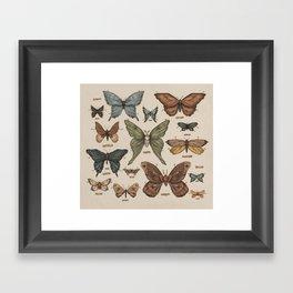 Butterflies and Moth Specimens Framed Art Print