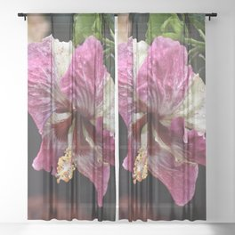 Portrait of a Hibiscus Sheer Curtain
