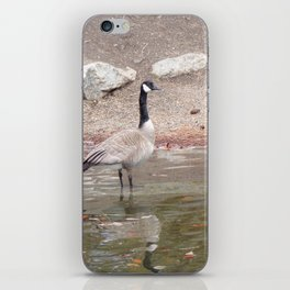Majestic Fellow, Beautiful Canadian Goose On Pond,Wildlife iPhone Skin