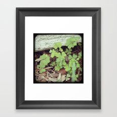 May Your Blessings Outnumber the Shamrocks that Grow Framed Art Print