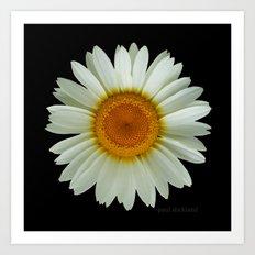 Summer White Daisy on Black Art Print