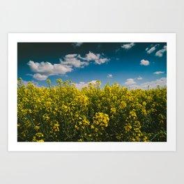 Summer Gold Art Print