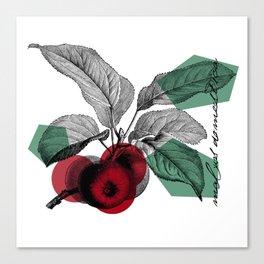 Botanic illustration of an apple Canvas Print