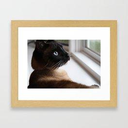 Meeko Framed Art Print
