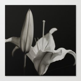 Lily & Bud Canvas Print