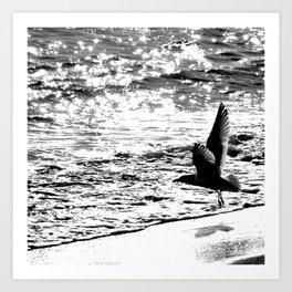 Seagull 1 Art Print