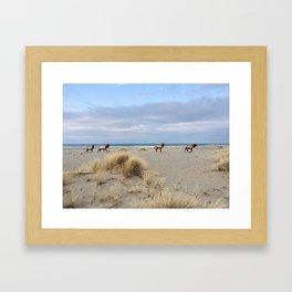 Roosevelt Elk Framed Art Print