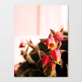 Succulents flowers - Canvas Print