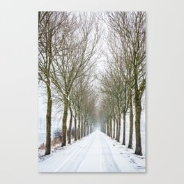 Snowy tree lined avenue - Holland Canvas Print