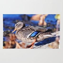 American Black Duck Rug