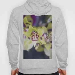 Longwood Gardens Orchid Extravaganza 74 Hoody