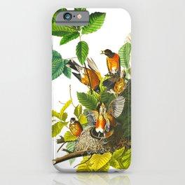 Vintage Scientific Bird Botanical Illustration iPhone Case