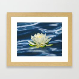 Water Lily Framed Art Print