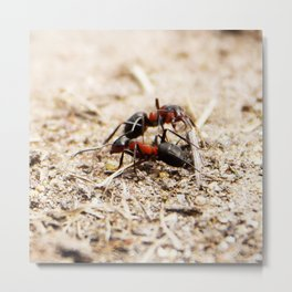 Ants 1 Metal Print