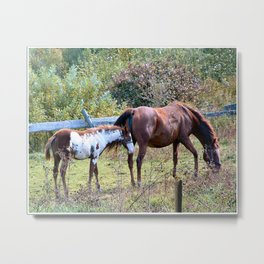 Nature Photo Metal Print