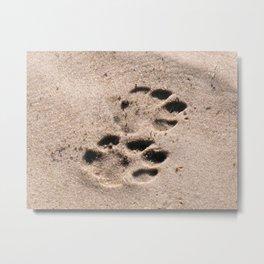 The Elusive Leopard  Metal Print