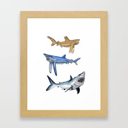 Mako Blue White Tip Sharks Framed Art Print