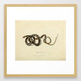 Snake by Sarah Stone, 1790 Framed Art Print