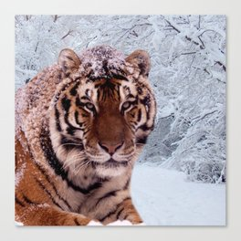 Tiger and Snow Canvas Print