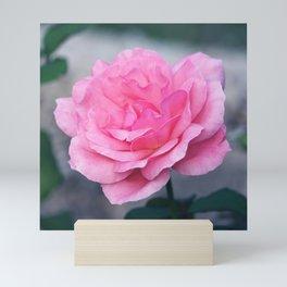 Gorgeous Pink Rose Mini Art Print