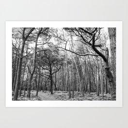 Trees 8 Art Print