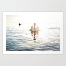 Swan Reflection Art Print