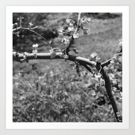 tree branch with Flowers Art Print