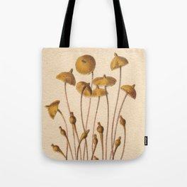 1800s Moss Lithograph Splachnum Luteum Tote Bag