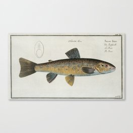 Vintage Illustration of a Brown Trout (1785) Canvas Print