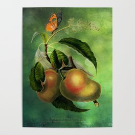 Bombay Mangos with Butterfly, Vintage Botanical Illustration Collage Art Poster