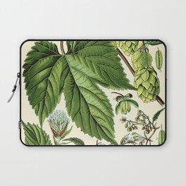 Humulus lupulus (common hop or hops) - Vintage botanical illustration Laptop Sleeve