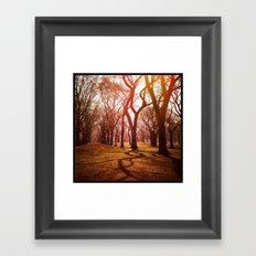 'CENTRAL PARK TANGLE' Framed Art Print