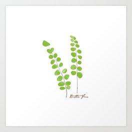 Button Fern Illustration Botanical Print Art Print
