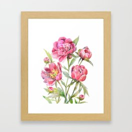 Peonies Watercolor Florals Botanical Design Framed Art Print