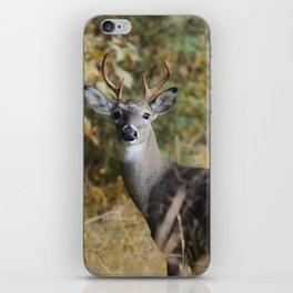 Buck in Autumn iPhone Skin