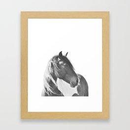 Stallion in black and white Framed Art Print