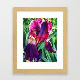 The Queen's Iris Framed Art Print