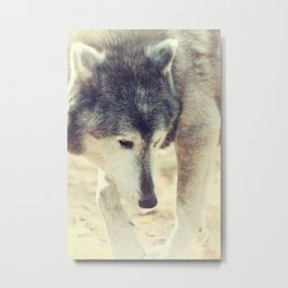 Wolfs Beauty Metal Print