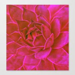 Suculenta Roja Canvas Print