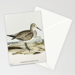 Great Sandpiper (Schoeniclus magnus) illustrated by Elizabeth Gould (1804–1841) for John Gould's (18 Stationery Cards