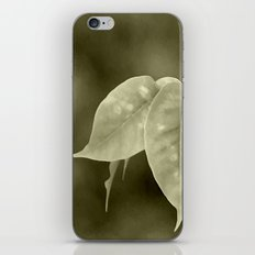 The curtain iPhone & iPod Skin