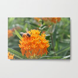 Orange on Orange  Metal Print
