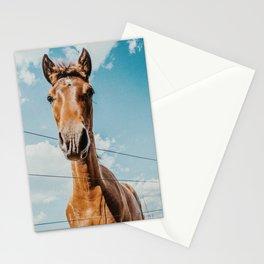 Yegua Porteña Stationery Cards