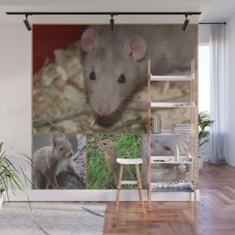 Cute rodents Wall Mural