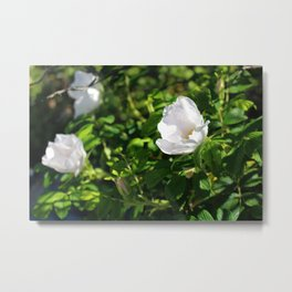 Sea Rose Metal Print