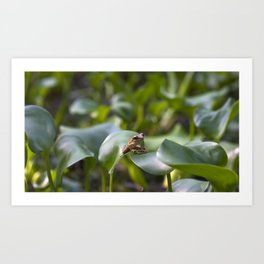 A frog patiently sitting on a leaf waiting for lunch to fly past! Art Print